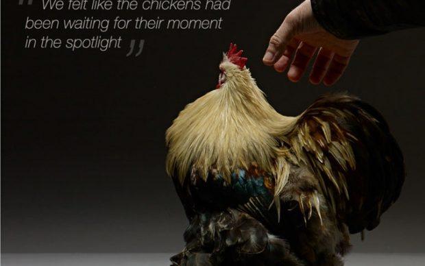 chicken libro fotografico