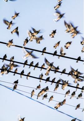 © YOSHINORI MIZUTANI, The Birds, 2015. Courtesy of Brownie Project (Shanghai)