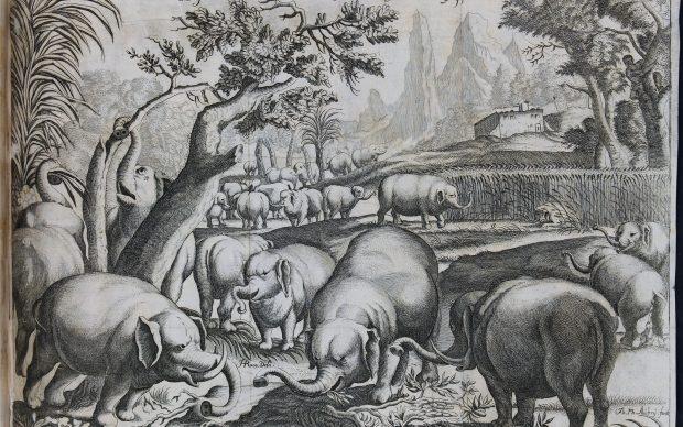 Elefanti etiopi, Modena, Biblioteca Estense Universitaria