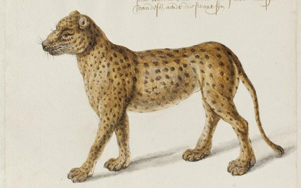 Franz Post illustrazione animali irlanda