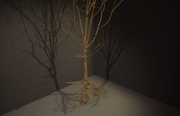 Henrik Håkansson, A Tree (Suspended), 2016. Courtesy: l'artista e Galleria Franco Noero, Torino. Veduta dell'installazione al Kunstverein Freiburg. Foto: Marc Doradzillo