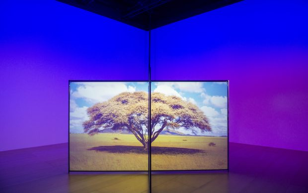 Diana Thater A Runaway World, 2017 Installation for two video projectors, two media players, and Altuglas Visio screens. 182.9 x 325.1 x 325.1 cm Courtesy the artist and David Zwirner, New York/London/Hong Kong