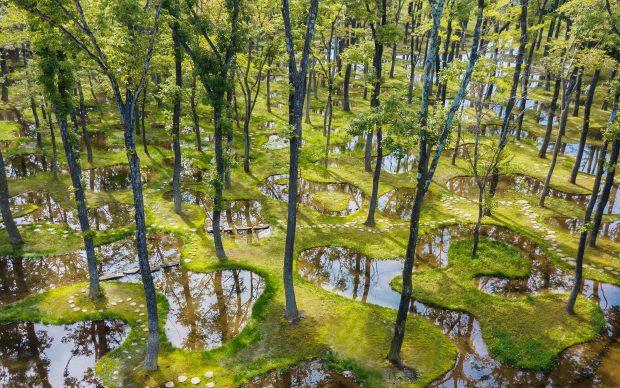 Junya Ishigami, Water Garden, Art Biotop Nasu, Giappone