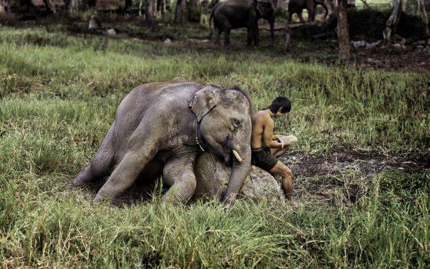 Steve McCurry Chiang Mai, Thailandia Anno: 2010 Credito fotografico: © Steve McCurry