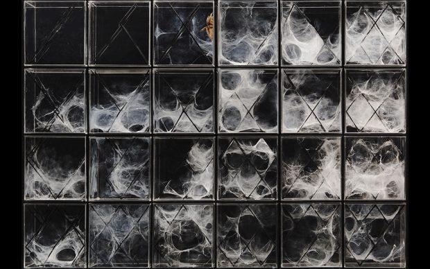 XenoDerma © Urban Morphogenesis Lab The Bartlett UCL