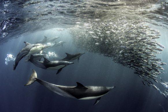 David Salvatori, The Assault, 2019. Copyright: © David Salvatori, Italy, Shortlist, Open, Natural World & Wildlife, 2019 Sony World Photography Awards