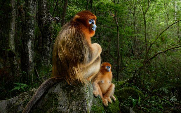 Marsel van Oosten, The Golden Couple, Wildlife Photographer of the Year 2018
