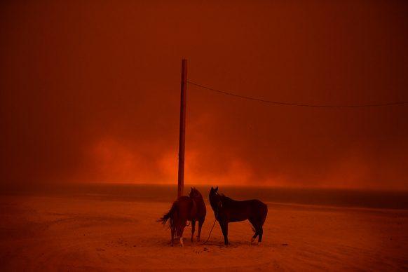 Wally Skalij/Los Angeles Times, Due cavalli sono legati ad un palo, avvolti nella nube di un incendio, California novembre 2018. Environment - Singles - Shortlisted