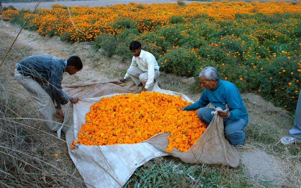 Ravi Agarwal, Have you seen the flowers on the river?, stampe fotografiche, 2007. Courtesy l'artista