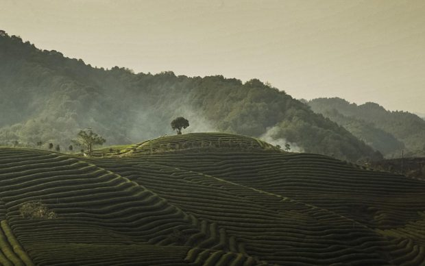 Il paesaggio collinare, terrazzato, delle coltivazioni biologiche del tè di Dazhangshan, fattoria di Kaoshui, ottobre 2018. Fotografia di Davide Gambino per Fondazione Benetton Studi Ricerche.