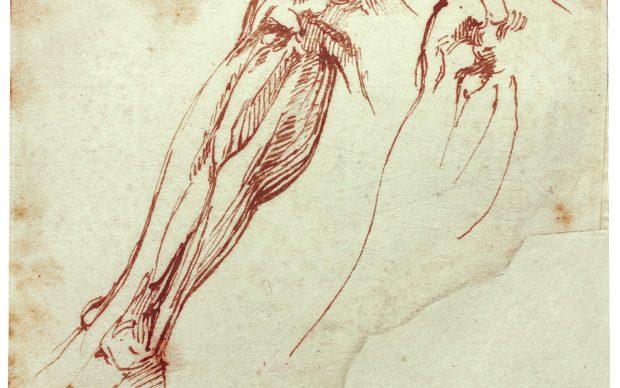 Disegno Michelangelo Buonarroti
