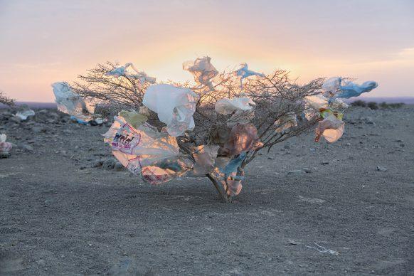 """Un'acacia coperta di sacchetti di plastica gettati dai viaggiatori. I nomadi Afar usano il termine Hahai, ovvero """"gente del vento"""", per descrivere rifugiati, disertori, lavoratori migranti e altri che attraversano furtivamente il deserto. FOTO: John Stanmeyer/National Geographic"""