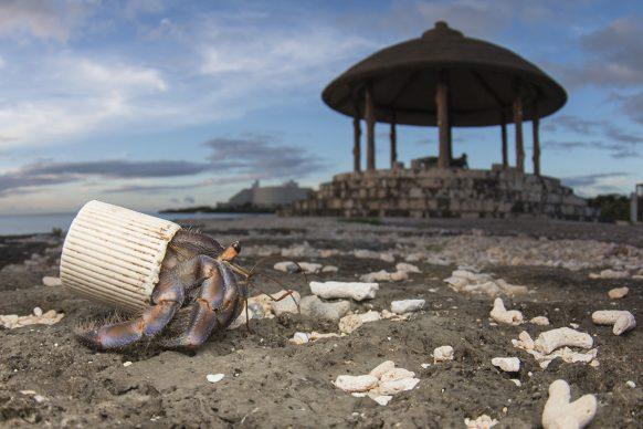 Nell'isola giapponese di Okinawa, un paguro eremita usa un tappo di plastica per proteggere il suo addome molle. In spiaggia gli uomini raccolgono le conchiglie usate dai paguri e abbandonano rifiuti.  FOTO: Shawn Miller