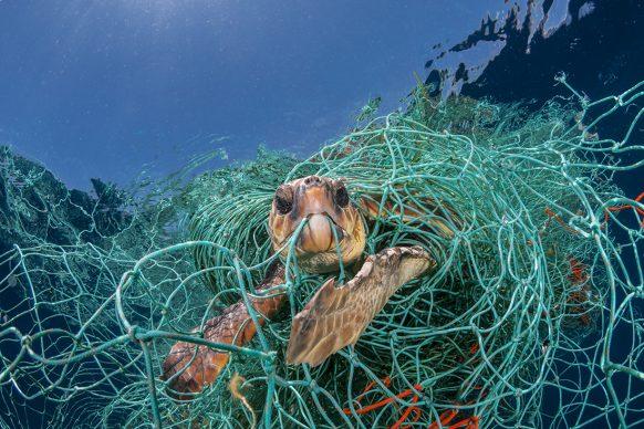 Una tartaruga marina impigliata in una vecchia rete da pesca in plastica al largo della Spagna. Poteva allungare il collo fuori dall'acqua per respirare, ma sarebbe morta se il fotografo non l'avesse liberata. Le reti abbandonate in mare sono una grave minaccia per le tartarughe marine.  FOTO: Jordi Chias