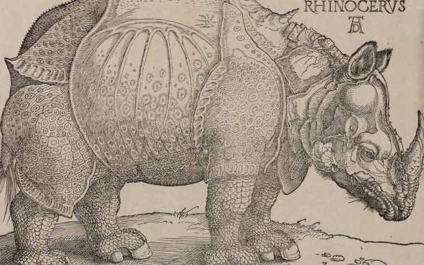 Albrecht Dürer, Rinoceronte, xilografia, 215 x 300
