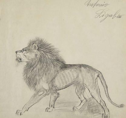 Antonio Ligabue, Leone (Lion), Undated (1952–1962), Pencil on paper, 45 x 48cm, Santa Vittoria di Gualtieri (Reggio Emilia), Private collection ©