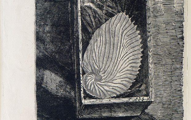 Luigi Bartolini, Argonauta argo. La fragile conchiglia, 1936, acquaforte. Courtesy © Archivio privato 'Luigi Bartolini'