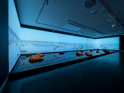 James Darling e Lesley Forwood, Living Rocks: A Fragment of the Universe, 2018, in mostra ai Magazzini del Sale, Venezia. Courtesy the artists and Hugo Michell Gallery. Installation view: Living rocks: A fragment of the universe, 2018, Hugo Michell Gallery, Adelaide, photo: Sam Roberts