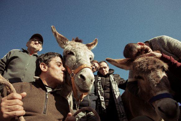 Master of Photography, quarta stagione, puntata 4 - Supereroi a quattro zampe, photo by Maria Giulia Costanzo