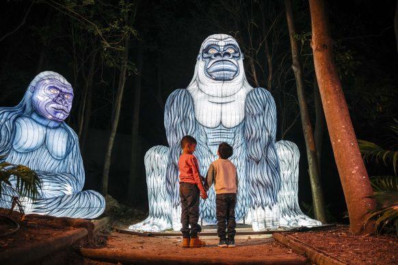 Vivid Sydney 2019, Taronga Zoo, Gorilla,, photo credits: Destination NSW.