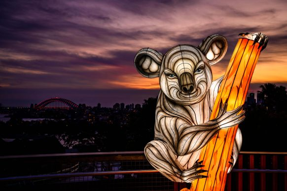 Vivid Sydney 2019, Taronga Zoo, Koala, photo credits: Destination NSW.