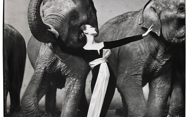 Richard Avedon, Dovima with Elephants, evening dress by Dior, Cirque d'Hiver, Paris, August 1955, gelatin silver print, the Museum of Fine Arts, Houston, gift of Karen Kelsey Duddlesten in honor of Anne Wilkes Tucker on the occasion of her retirement. © The Richard Avedon Foundation