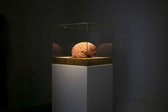 Jan Fabre, A brain full of empathy? a Palazzo Merulana. Photo credits CoopCulture per Palazzo Merulana