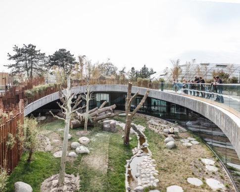 Panda House al Copenhagen Zoo. Photo credits Rasmus Hjortshoj