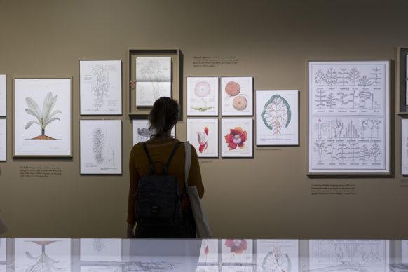 """Vista dell'allestimento della mostra """"Nous Les Arbres"""". Parigi, Fondation Cartier pour l'art contemporain. Photo Thibaut Voisin"""