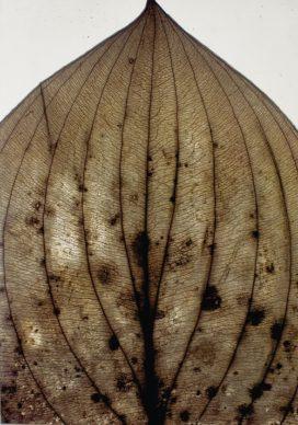Nino Migliori, Herbarium, 1974, C-print vintage-unicum su supporto legno, 140x100 cm © Fondazione Nino Migliori