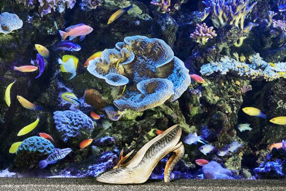 Maquereau shoe created in 1987, at the Tropical Aquarium of the Palais de la Porte Dorée (based on a visual archives from 1988)  © Christian Louboutin