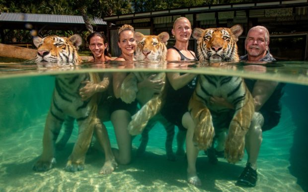 The Tigers Next Door © Steve Winter, United States, for National Geographic