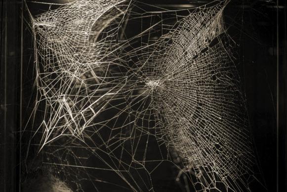 Tomás Saraceno, Web of at‐tent(s)ion, 2020 (dettaglio). Courtesy the artist; Andersen's, Copenhagen; Ruth Benzacar, Buenos Aires;  Tanya Bonakdar Gallery, New York/Los Angeles; Pinksummer Contemporary  Art, Genova; Esther Schipper, Berlin  © Photography by Ela Bialkowska, OKNO Studio