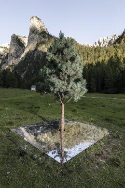Henrik Håkansson, A Tree Mirrored (Pinus Cembra), 2020. Installation. Courtesy of the artist and Galleria Franco Noero, Torino. Ph. T.Sorvillo / L.Guadagnini