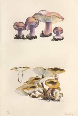 Mushroom Book 1972. Scan of 63/75, Plate I, Artwork by Lois Long Courtesy of the John Cage Trust