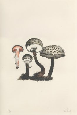 Mushroom Book 1972. Scan of 6375, Plate II, Artwork by Lois Long Courtesy of the John Cage Trust