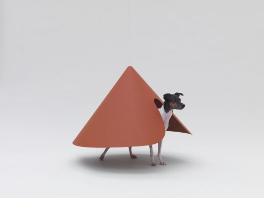 Pointed T by Hara Design Institute for Japanese Terrier. Photo Hiroshi Yoda