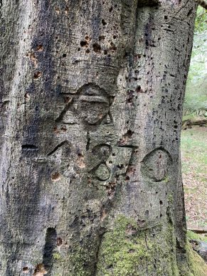 Date on tree. Courtesy New Forest National Park Authority