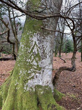 The King's Mark. Courtesy New Forest National Park Authority