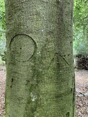 Witches marks. Courtesy New Forest National Park Authority
