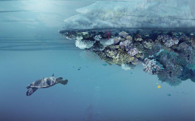 Render della parte sottostante l'isola in grado di creare un habitat per diversi tipi di invertebrati, muschi e piante. Copyright Angelo Renna
