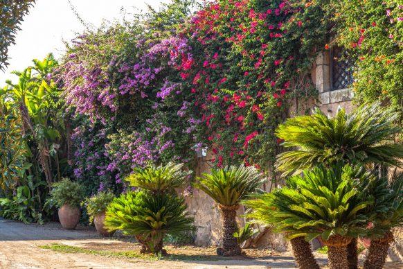 Sicilia, Tenuta San Giuliano, photo Ferruccio Carassale