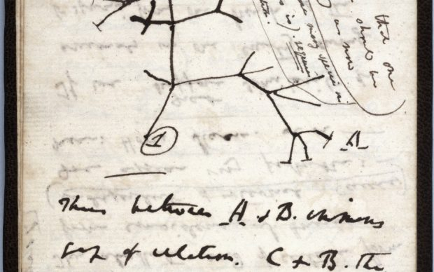 Tree of Life sketch. Please credit Cambridge University Library