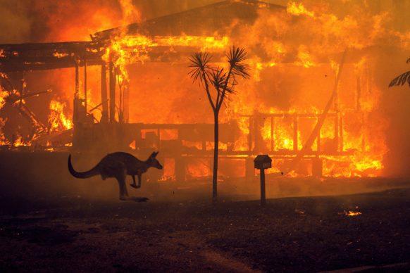 Un canguro che scappa davanti a una casa in fiamme nella cittadina di Lake Conjola, Australia, 2019 © Matthew Abbott : The New York Times