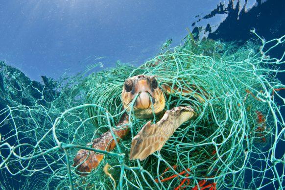 Una tartaruga Caretta caretta intrappolata in una rete da pesca abbandonata alla deriva, Mar Mediterraneo, 2010 © Jordi Chias : Nature Picture Library