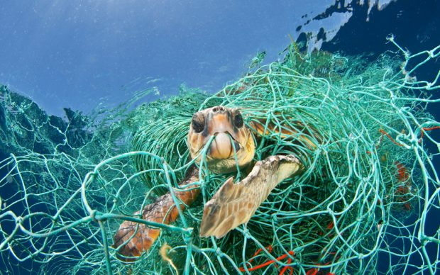 Una tartaruga Caretta caretta intrappolata in una rete da pesca abbandonata alla deriva, Mar Mediterraneo, 2010 © Jordi Chias / Nature Picture Library