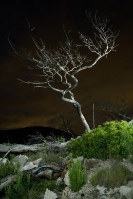 © Charles Xelot - Dead Tree #1