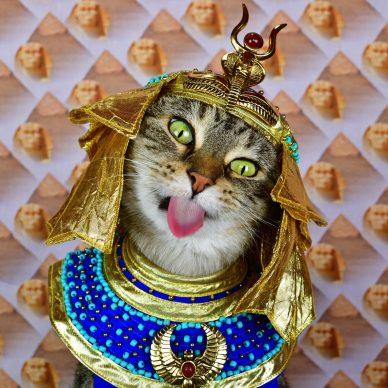 """A Cat's Tale. A Journey Through Feline History"". Credit Paul Koudounaris"