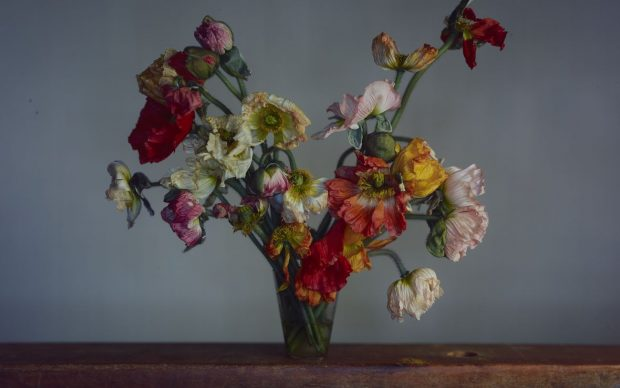 Richard Learoyd, Large Poppies, 2019©the Artist. Image courtesy of Michael Hoppen Gallery