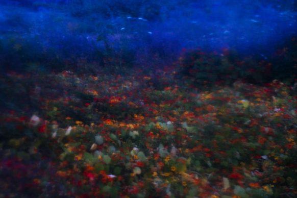Annette Schreyer, dalla serie Songs of the Sirens/1